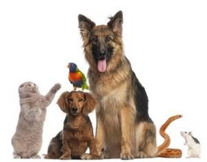 חיסון כלבת לכלבים