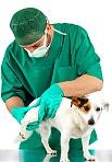 חיסונים לכלבים גורים