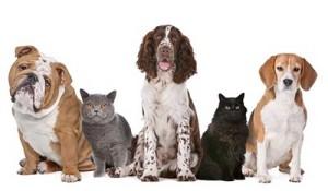 מחלות כלבים